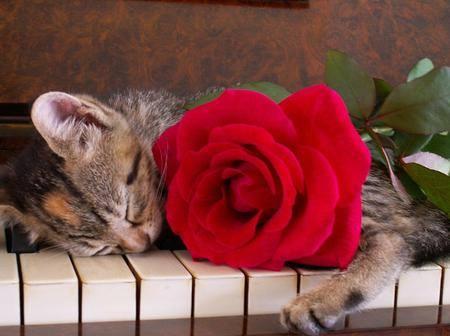 Kitty Piano1