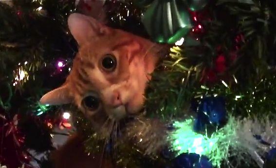 Cats vs Christmastrees!