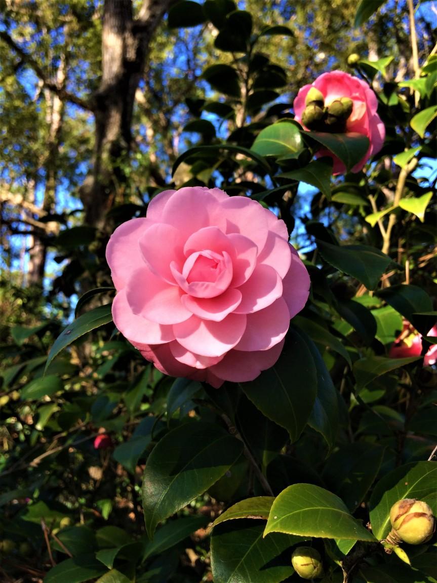 Beautiful Florida: Mead BotanicalGarden