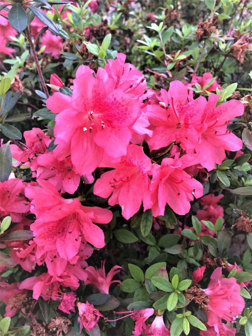 Beautiful Florida: Lake Eola Blossoms &Foliage