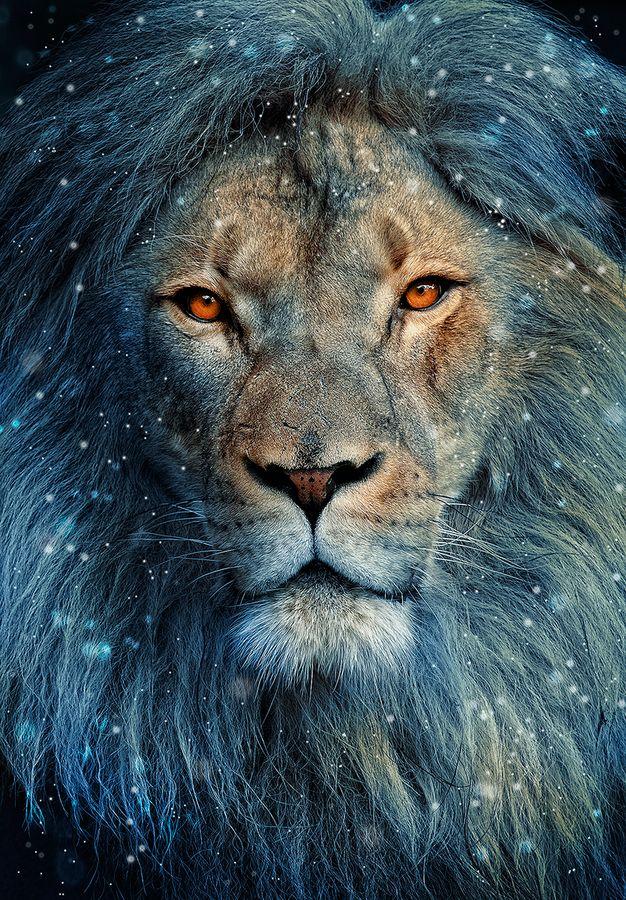 Memo at midnight: Love the world, beware thelion
