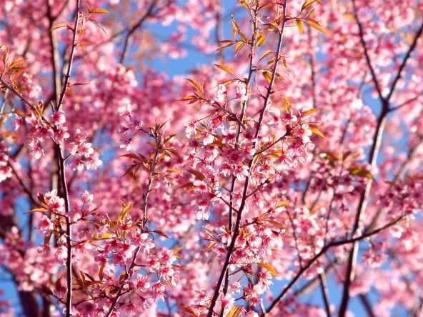 background beautiful bloom blooming