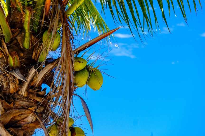 blue sky clear sky clouds coconut tree