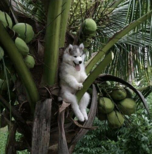Funny coconuts!