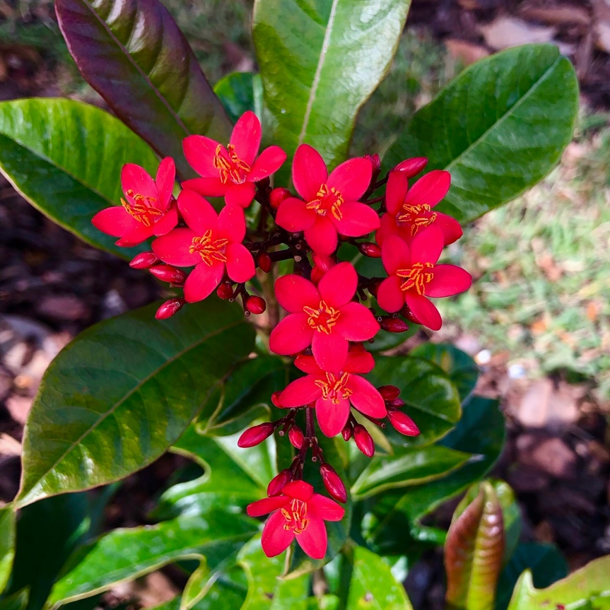 Florida flowers: Pretty Peregrina on a picture perfectday