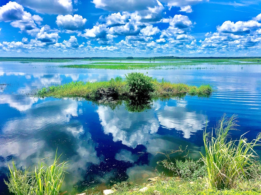 Beautiful Florida: St. John's River, alligators and the plight ofcows