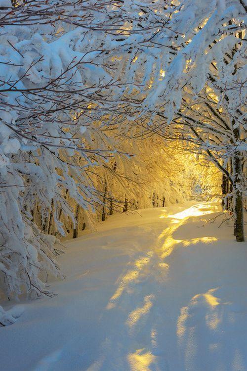 Snowy Winter Yellow Glow