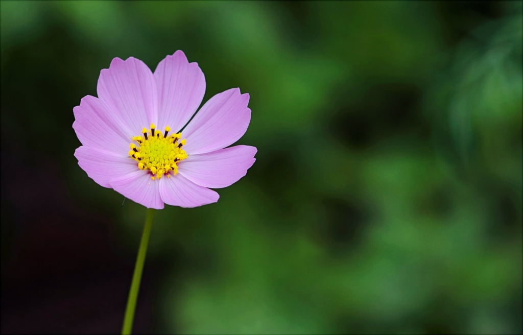 pretty flower, the key to happiness