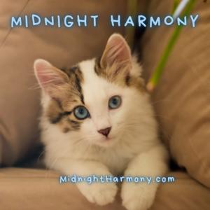 Closing cat, Midnight Harmony MidnightHarmony.com