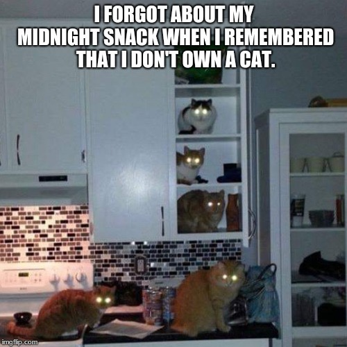Midnight snack cat memes