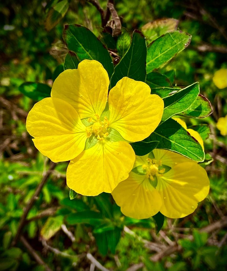 Wildflowers and a wanderlustspirit