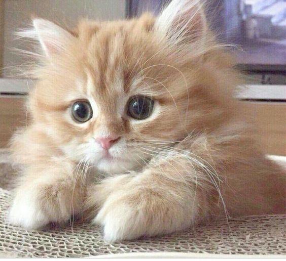 Happy Monday: Kittens sayhello…