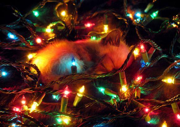 Cuteness overload: Sleepy Christmaskittens!!