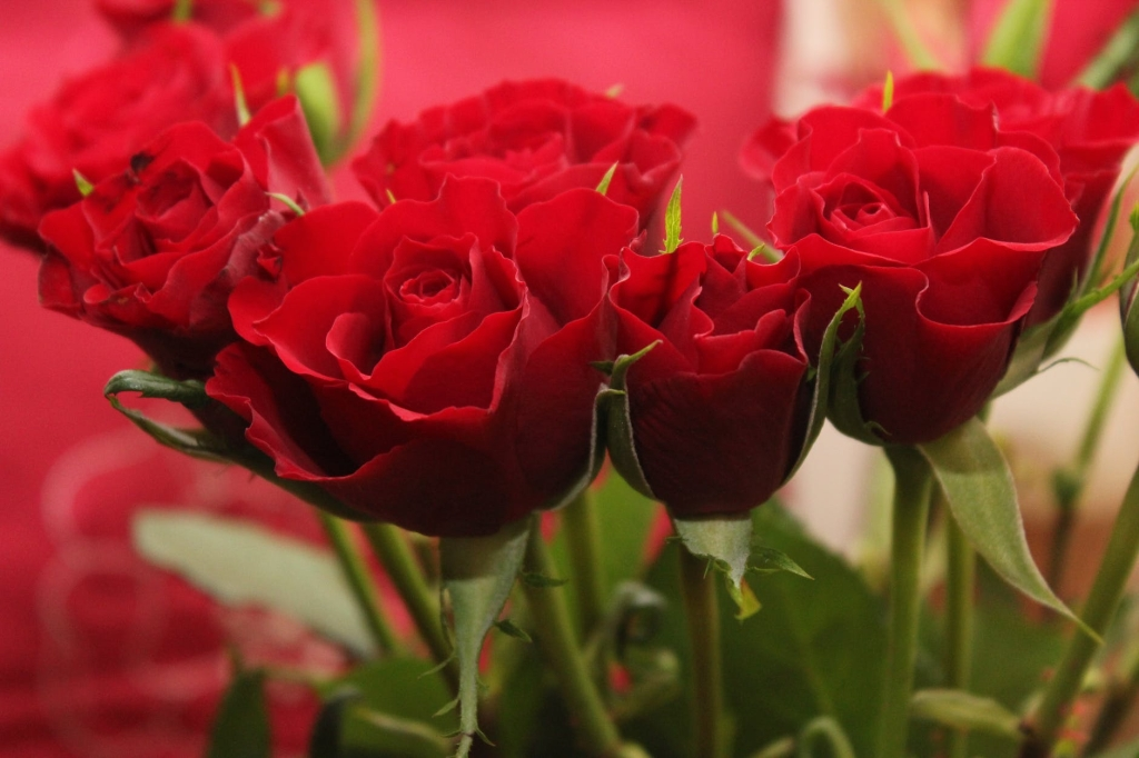 Red roses, things that are red